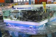 广东沃尔玛销售的活草鱼检出孔雀石绿