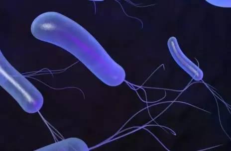 幽门螺旋杆菌阳性,是否意味着会得胃癌?
