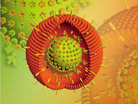 第一时间   EB病毒或可诱发乳腺癌