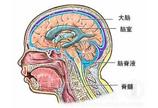 脑室腹腔引流手术