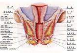 女性生殖器系统完全图示详解