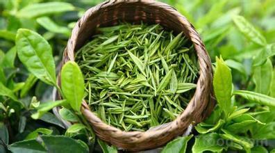 喝茶解腻还明目 夏季饮绿茶最养生