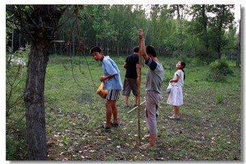 村民抓昆虫,1夜挣1000,却把更有用的宝贝中药遗漏了