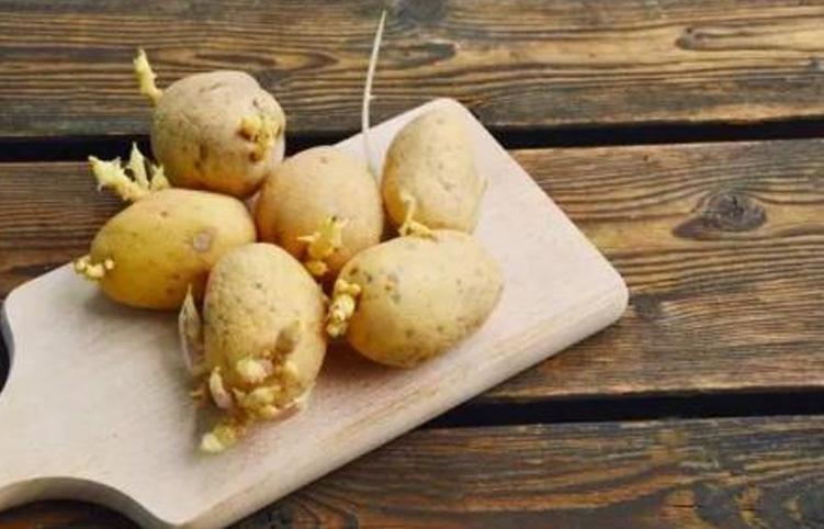 土豆发芽别扔!用处竟有这么大