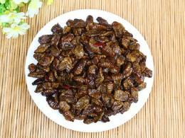 吃蚕蛹有什么好处?