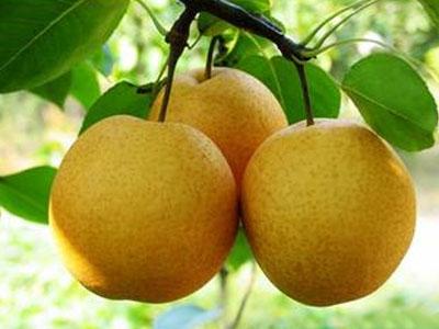 什么人千万不能吃梨?