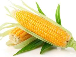 玉米到底是升血糖还是降血糖?营养师告诉你
