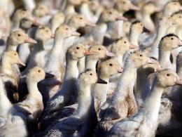 湖南凤凰发生H5N6禽流感疫情 现已有效控制