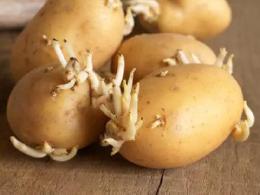 土豆发芽有毒吗?还能不能吃?