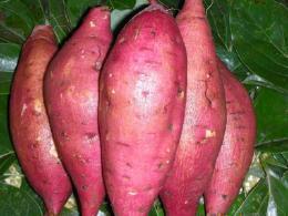 吃红薯对身体有哪些好处 可以抗癌吗